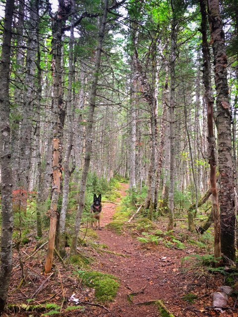 Otherworldly Forest